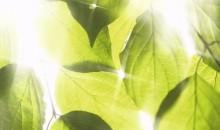Green-sauna-optie-KLAFS-2