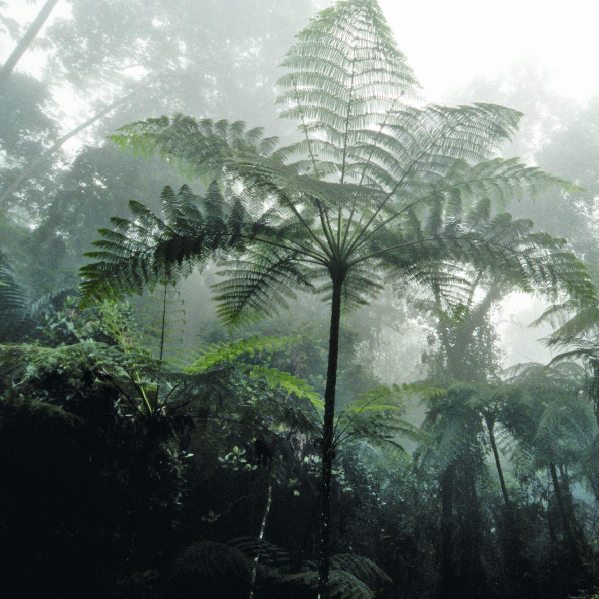 Tropisch-bad-sanarium-KLAFS-stemming